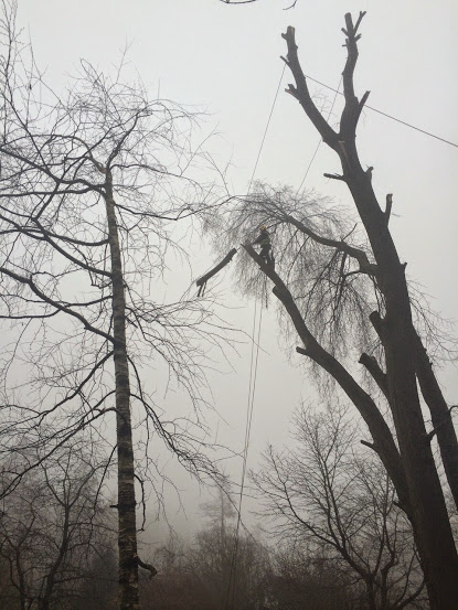 Rizikové kácení stromu v obci Dyje, Znojmo