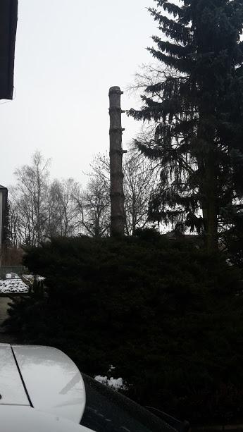 Rizikové kácení borovice, Žďár nad Sázavou