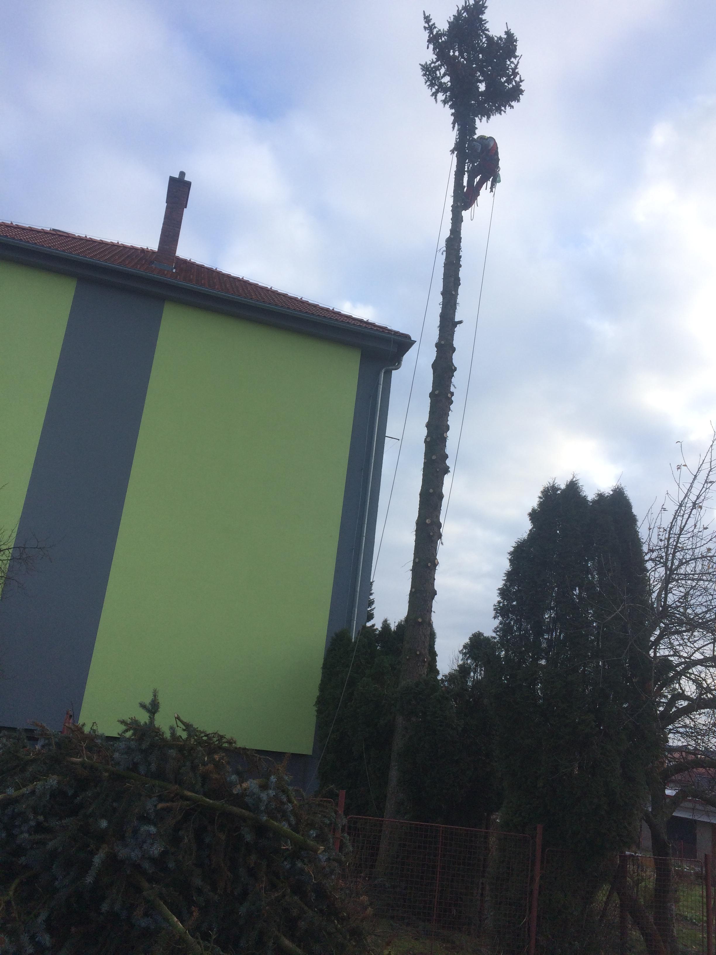 Rizikové kácení stromu, Přibyslav