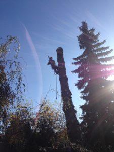 Rizikové kácení stromů, Havlíčkův Brod