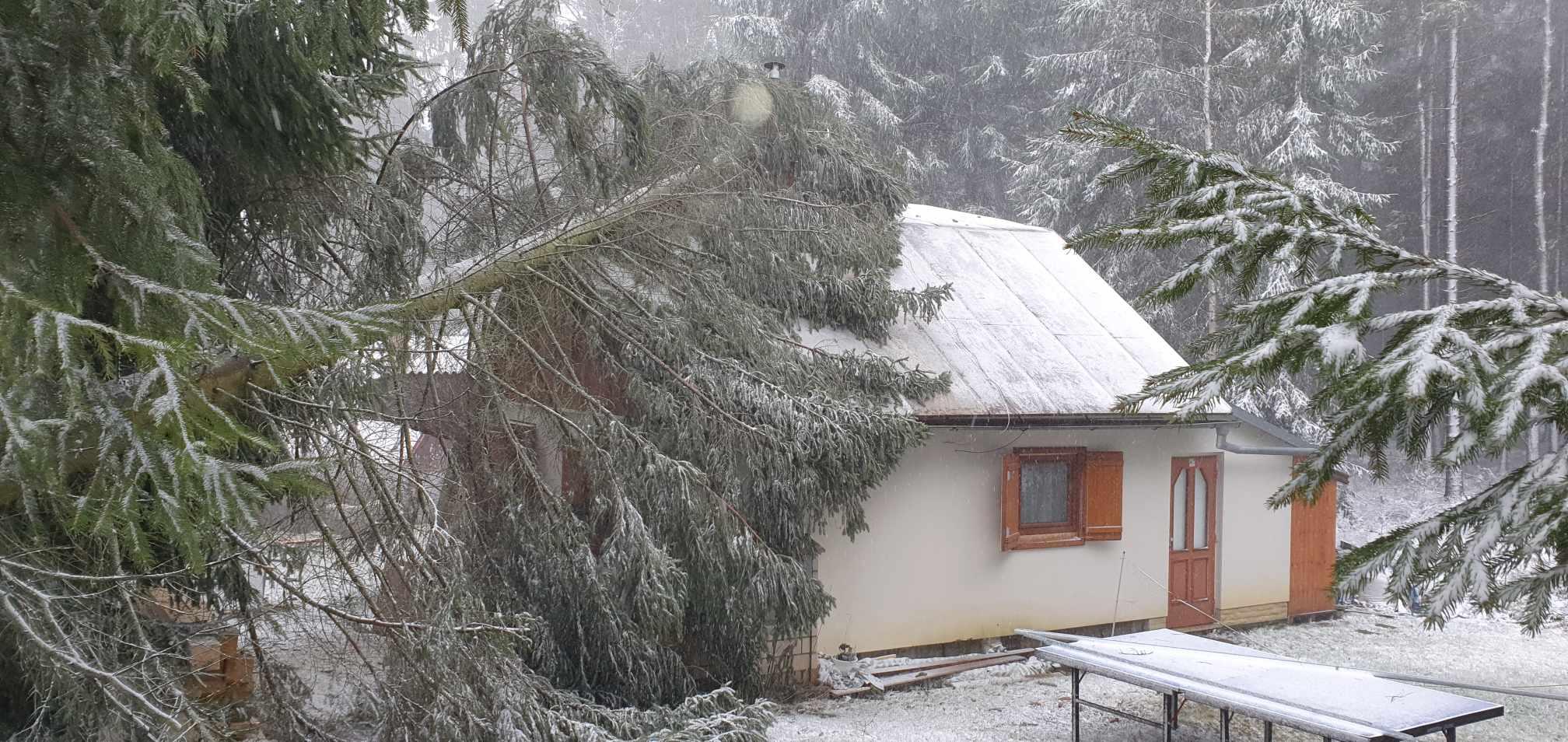 Odstranění vyvráceného stromu