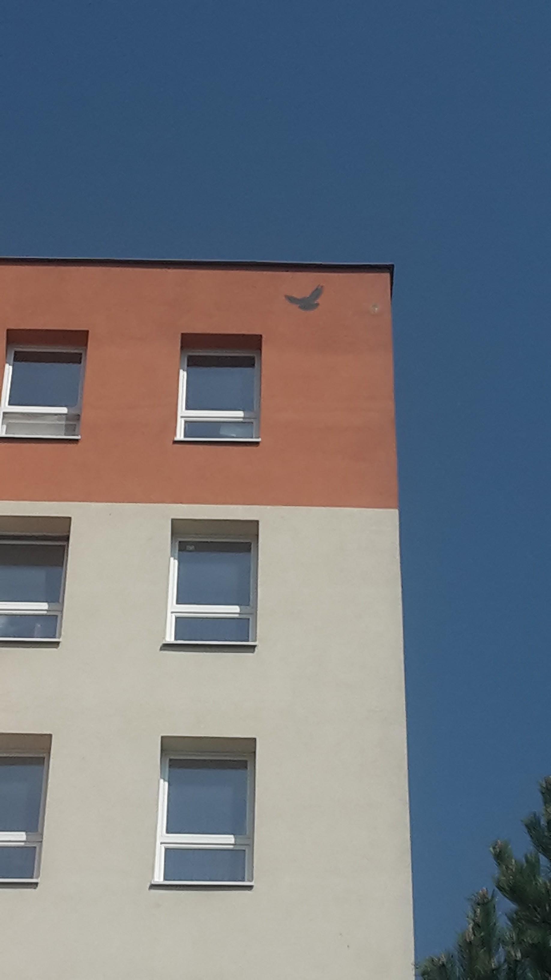 Oprava fasády po hnízdění a natření imitace dravce, Žďár nad Sázavou
