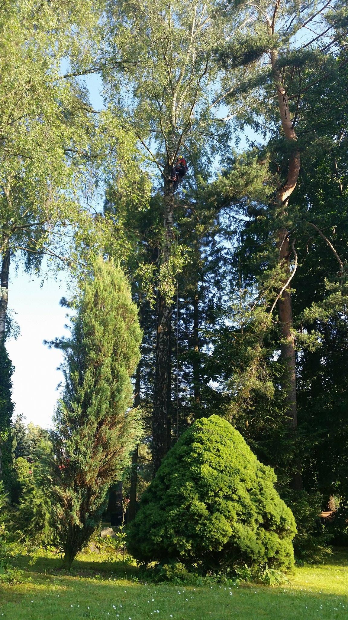 Odstranění zlomených větví po bouřce, Krucemburk