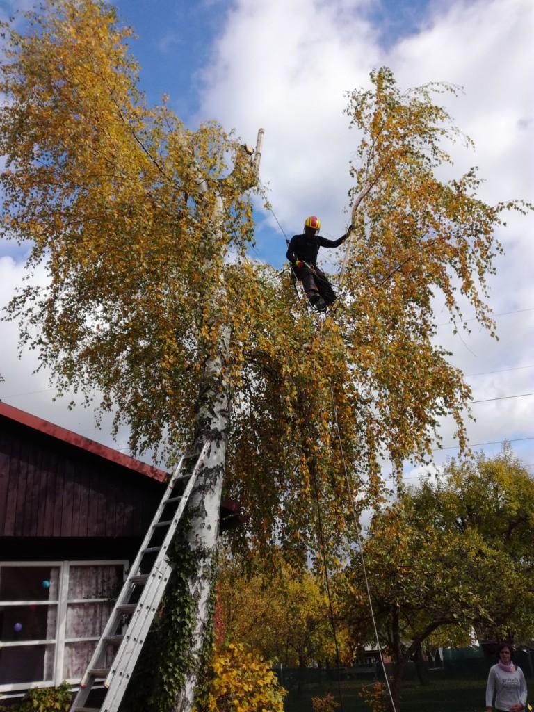 Snaha o nápravu špatně ořezaného stromu nemusí být vždycky úspěšná.